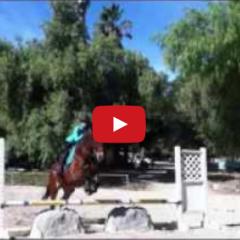 Why Horses Matter-December