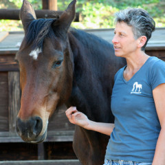 Why Horses Matter – They Can Be Healers