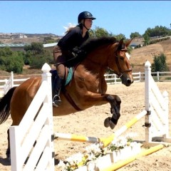 THE GOOD HORSE – from Auction to August's HOM