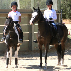 Everyday Wisdom from Everyday Horse People -Zika and Horses