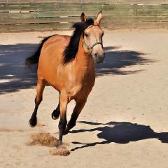 """La Femme Nikita"" – THE GOOD HORSE for July"