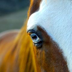 """Meet """"Bob"""" September Horse of the Month"""