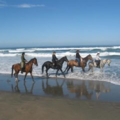 Equine Benefits – Ocean Trail Riding