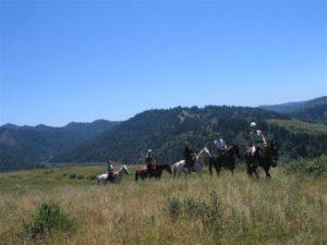 Group in meadow (Medium)