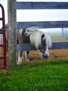 md-pony