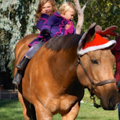 "THE GOOD HORSE – Have a very ""Monty"" Christmas"