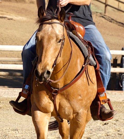 monty-western
