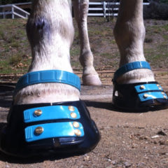 Everyday Wisdom – An Open-minded Approach to Hoof Care