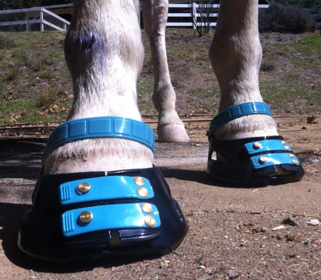Everyday Wisdom An Open Minded Approach To Hoof Care