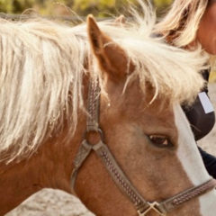 Why Horses Matter- Combating Opioid Addiction