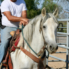 Stellar Stallion Finds Forever Home in Hidden Hills