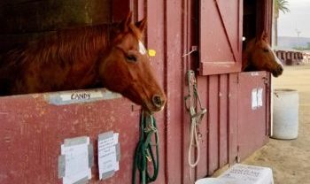 Everyday Wisdom – Horses Bring Out Our Best